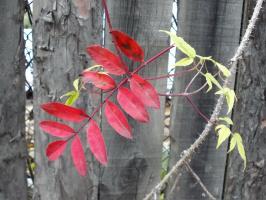Осенний флажок