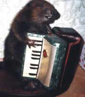 первый парень-гармонист!