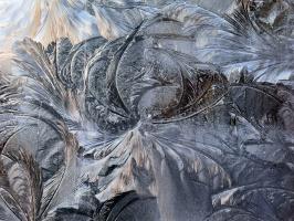 Ледяной пион