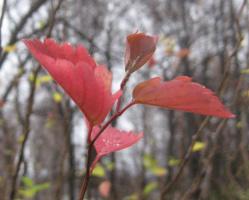 """"""" Осенние листья...""""-3"""