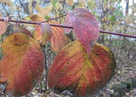 """"""" Осенние листья...""""-1"""
