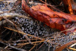 Дождь прошел осенний...