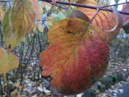 """"""" Осенние листья...""""-2"""
