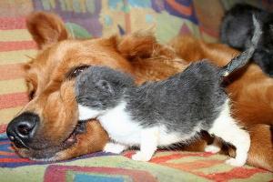 Собаке не нравится :)