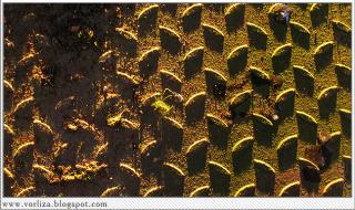 Лабиринт теней