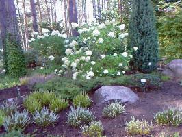 Ботанический сад г. Вильнюс