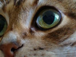 а вы сможете определить это кошка или кот? )))