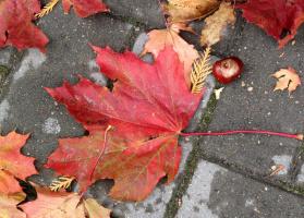 Осенний натюрморт на плитке.