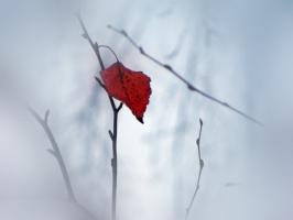одиноко на ветру