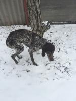 брошенный пес