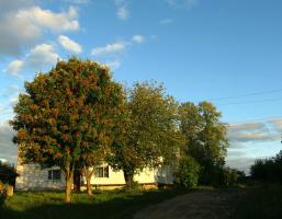 Ничем не примечателен тот дом...,если бы не рябина...и уходящее лето...