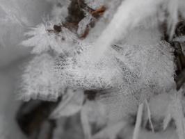 Зимой бывает красивый иней