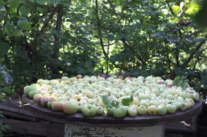 будущий яблочный пирог
