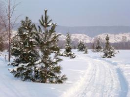 раз морозною зимой вдоль опушки лесной...