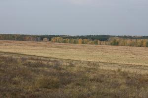 осень 2010г 046