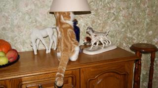 Лампа есть,а света нет!