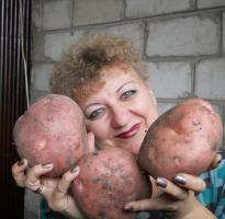 Наша картошечка