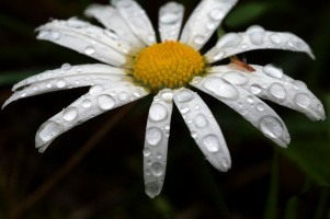 Цветы тоже плачут
