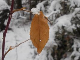 Первый снег и последний лист
