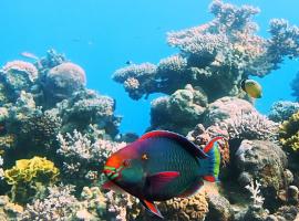 Жизнь в коралловых рифах (Эйлат)