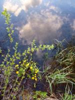 небо в воде