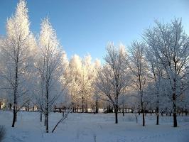 И снова зима в городе...