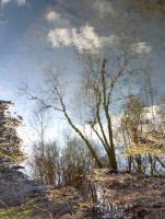 отражение тишины