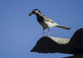 Птичьи хлопоты
