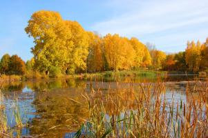 Золото над озером