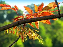Осеннее увядание