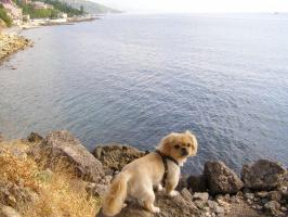 А Вы море видели?