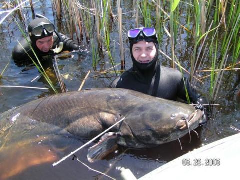 трофеи рыбалки подводная охота