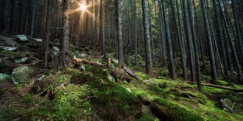 В Канаде сняли на видео «дышащий» лес