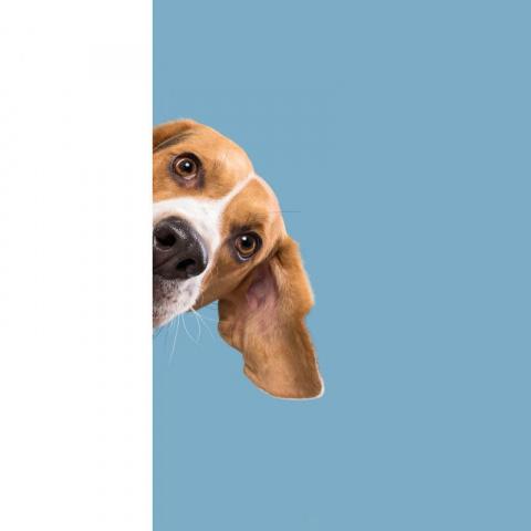Эльке  Фогельзанг  и его потрясающие  фотографии собак