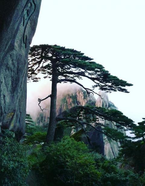 Самое известное дерево Китая спасают от туристов