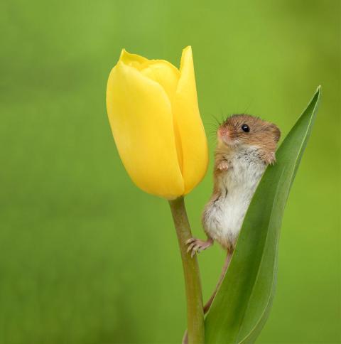 Позитив от Майлса Герберта или мыши в тюльпанах