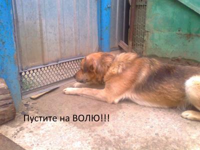 Собак за решеткой