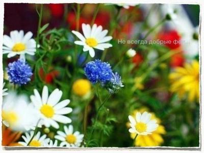 Цветы – остатки рая на Земле.