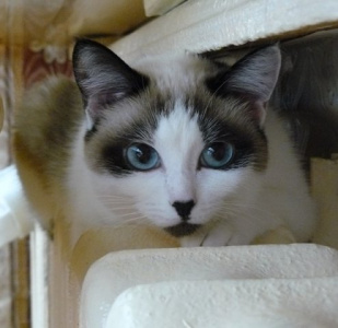 Праздник кошек