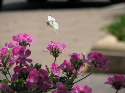 А у меня такая есть бабочка! )