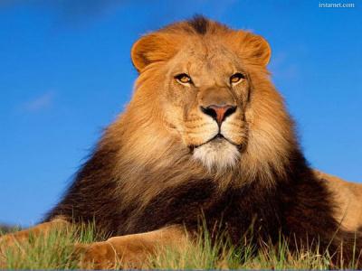 Цар!!!!!!