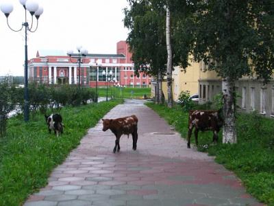 Кондопога Бывает и так)))  Дворец культуры