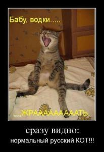 Нормальный русский кот.