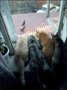 Опять попугай новую тачку пригнал.