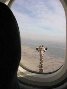 как полёт???