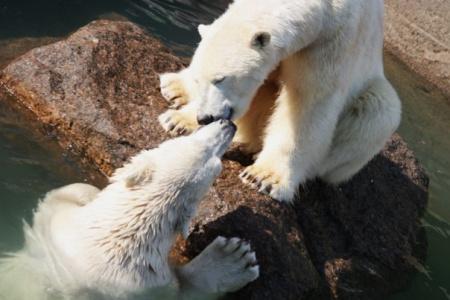 Дай я тебя поцелую :)