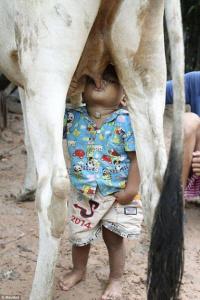 Молоко вдвойне вкусней, если ... без посредников )))