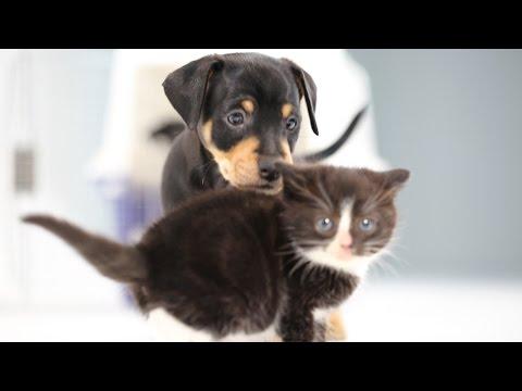 Котята видят щенков первый р…