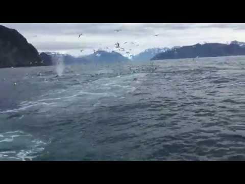 Рыбак решил снять чаек в небе, но посмотрите 57 секунду, произошло такое…
