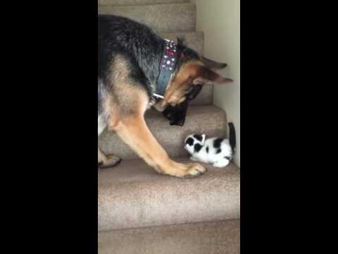 Котенок не мог подняться по …